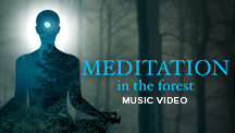 Meditation In The Forest - Video Song