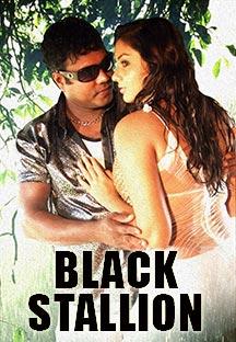 Watch Black Stallion full movie Online - Eros Now