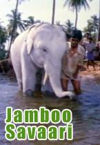 Jamboo Savari